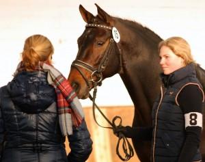 Warendorf 2015 (1)